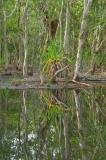 Reflecting pool with paperbark and pandanus _DSC3707