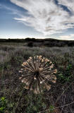 tumbleweed and clouds _DSC0773