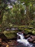 Westgid Creek DSCN0883