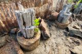 Mangroves and old bridge pilings _DSC5157