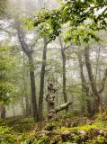 Dead tree in mist DSCN0319