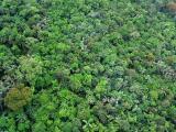 Nigerian Jungle