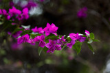 Primavera135L.jpg