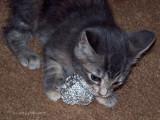 Kitten meets the Metal!