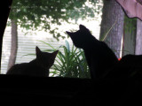 Talking through the Window!