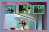 Scene from Hospital Window