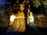 The Old Oak Tree!