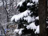 First Heavy Snow of  Season!