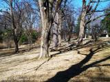 004 Cave Hill Grounds.JPG