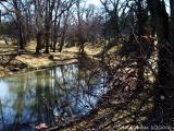 Rose Oak Leaf near Teardrop Pond.JPG