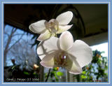 Orchid Gallery