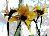 Gold Digger Orchid with Watercolor filter.