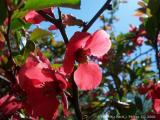 Spring has Sprung in West Virginia (USA).