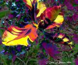 Tiger Tulip