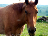 Friendly Horse with Scarred Face.