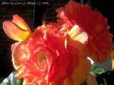 Sunny Flowers at Dusk.