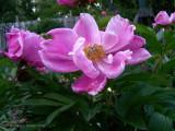 Summer Pink!