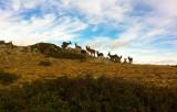 Cabras en Vardemartín