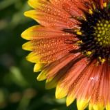 Wild Flower  1419