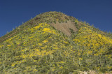 A Mountain of Flowers and Cactus    6635