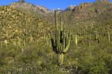 Desert Scape      6863