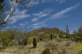 Desert Landscape     6818