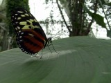 Niagara Falls 8-28-04 Butterflies Dsc00088.jpg