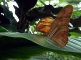 Niagara Falls 8-28-04 Butterflies Dsc00080.jpg