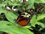 Niagara Falls 8-28-04 Butterflies Dsc00082.jpg