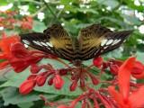 Niagara Falls 8-28-04 Butterflies Dsc00091.jpg