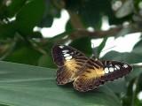Niagara Falls 8-28-04 Butterflies Dsc00116.jpg