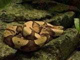 Snakes '08 DSC01228.jpg