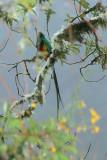 Birding Abroad