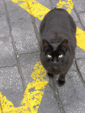 A Black Cat On The Yellow Line
