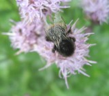 A Bee On The Flower 2