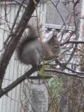Squirrel 4/4