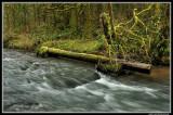 Shotgun Creek