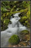 One Mossy Creek