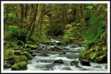 One Green Creek