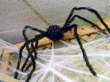 SPIDERS8 copy.jpg