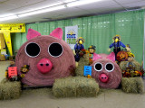 PIGS 4 copy.jpg