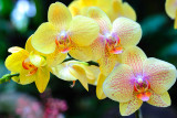 Orchid (01-Unknown)