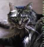 Flora's Kitty Mica
