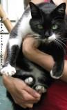 Milka Kitty