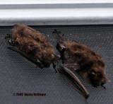 You Can See Bat Feet