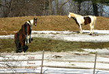 Favorite Horses in Norwich
