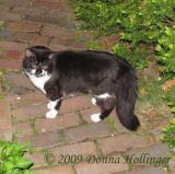 Kitty Tobias