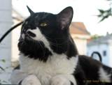 Tobias the Kitty