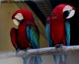 Macaw Mates