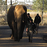 Saturday Morning Walking the Elephants